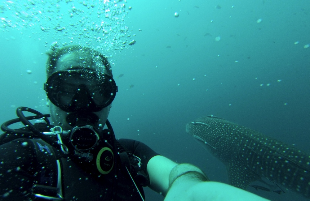 Whalefie - A Selfie with Whale Shark