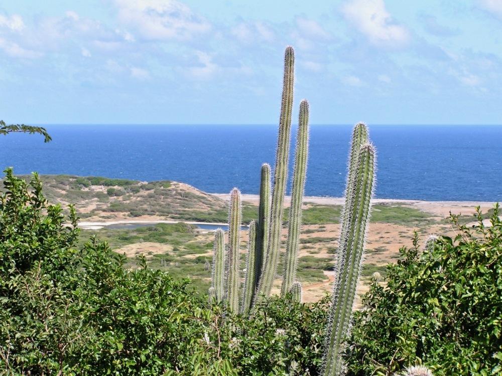 Curacao Christoffelpark